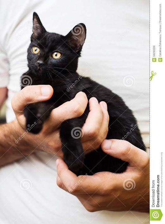 Man hands holding a black baby cat