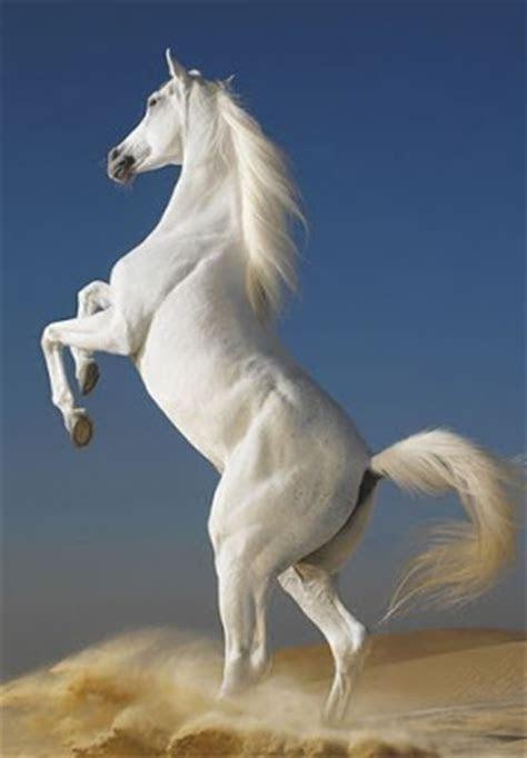 foto kuda lucu animasi gambar bergerak  kawin