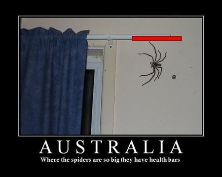 photo of a huge spider