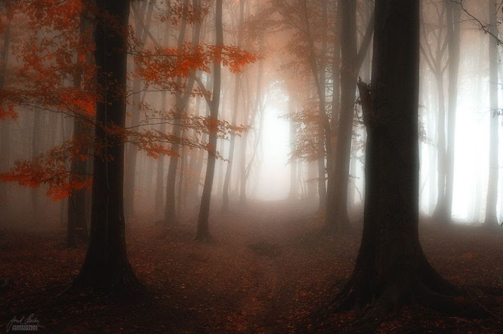 Os bosques outonais oníricos de um fotógrafo tcheco 10