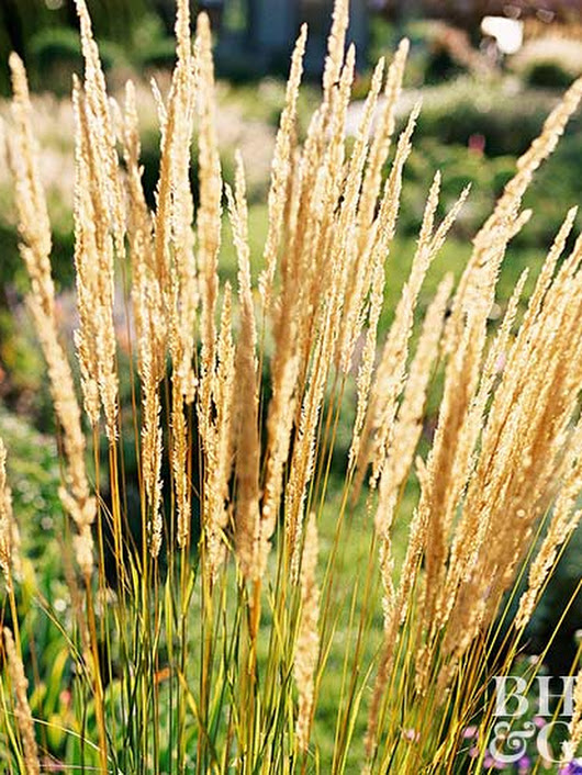 17 Top Ornamental Grasses