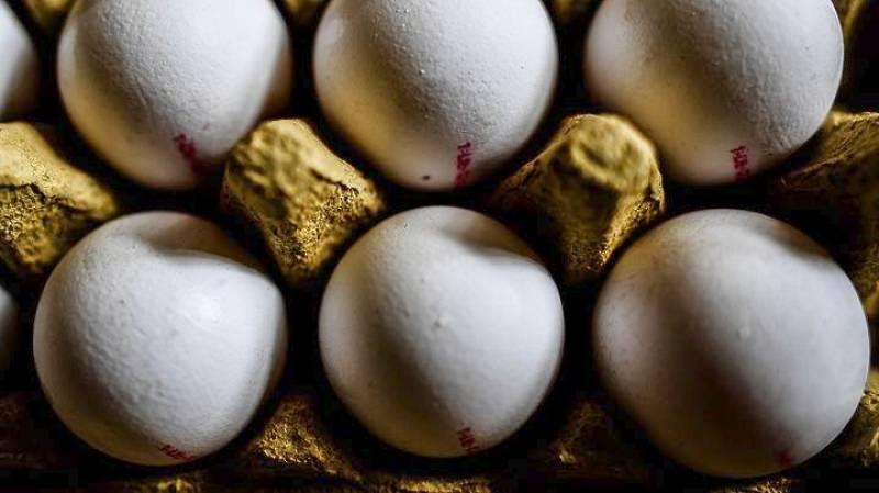 Έρευνες σε Βέλγιο και Ολλανδία για τα μολυσμένα αυγά