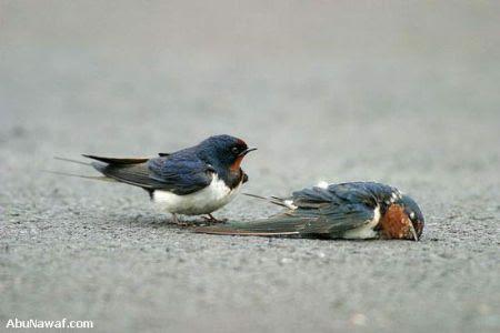 http://www.muruganad.com/fw/images/bird6.jpg