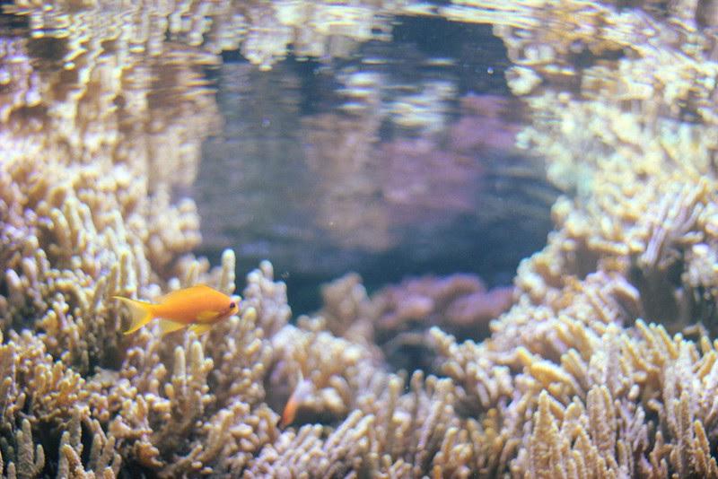 lisbon oceanarium 3