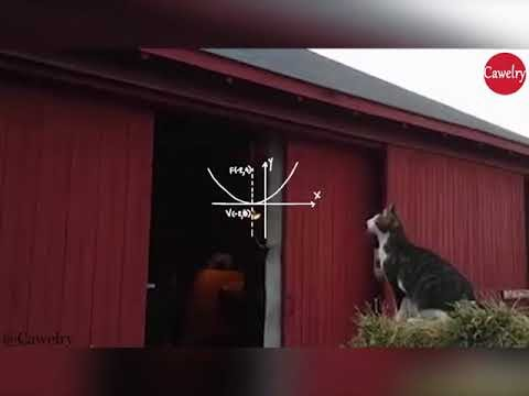 Best Cat Jump Fail Video Clip