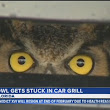 Florida woman finds owl stuck in her car grill