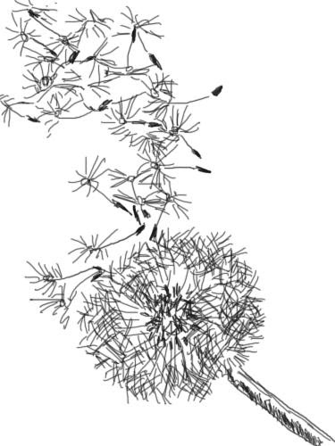 Dandelion Blowing Drawing At Getdrawingscom Free For Personal Use