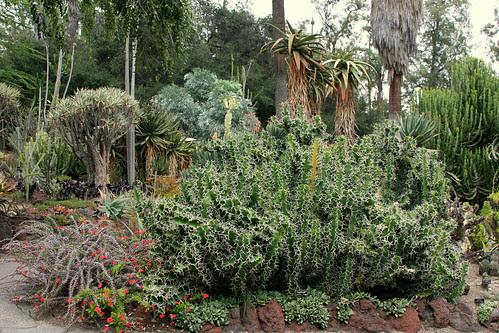 huntington succulents
