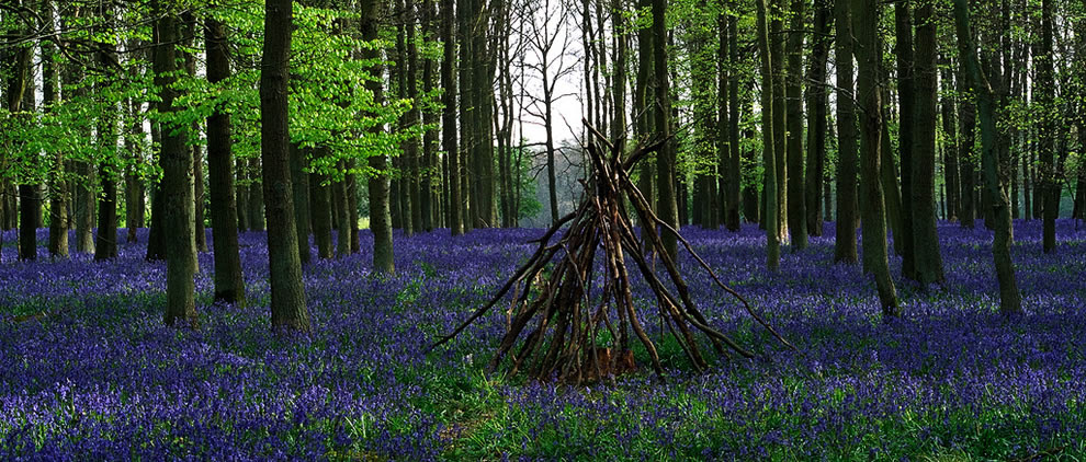 Bluebells and Spring at Ashridge Forest