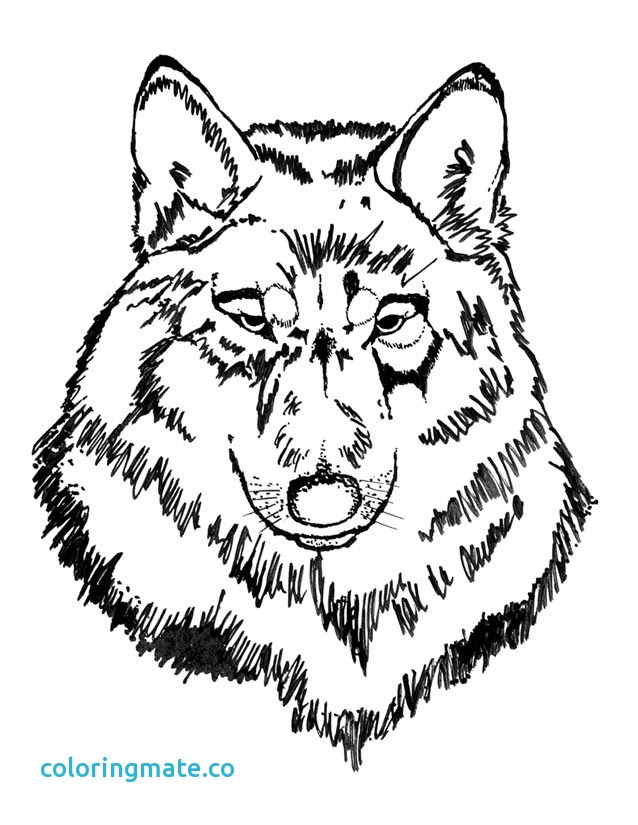 Wolf Head Coloring Pages at GetDrawings | Free download
