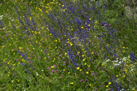 How to Create a Wildflower Garden for Bees - Green Garden Buzz