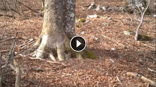Man Decides To Film A Tree In The Woods For An Entire Year. What The Camera Captured Is Breathtaking