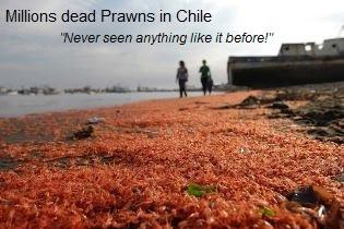 Dead Prawns Chile