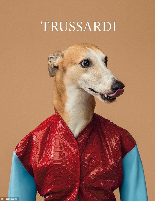 Nella mano: cappotti in pelle pregiata di Trussardi assumono nuova forma sul retro di un Greyhound