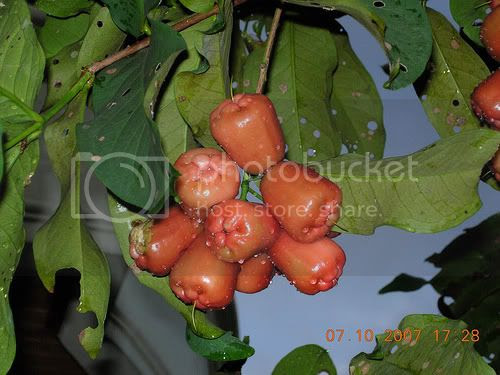 Cashew water was drug ulcers