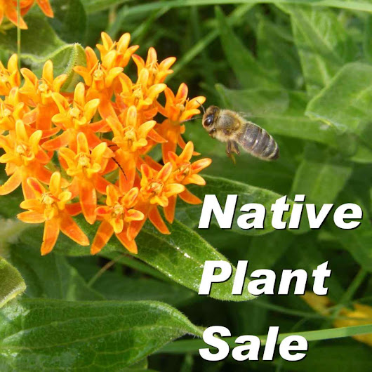Today – PTA Native Plant Sale! Thursday, May 10