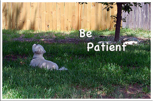 Be-Patient-2