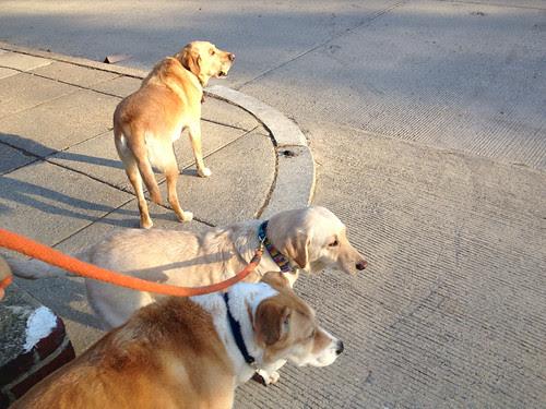 #Errandonnee #3 - dog walking