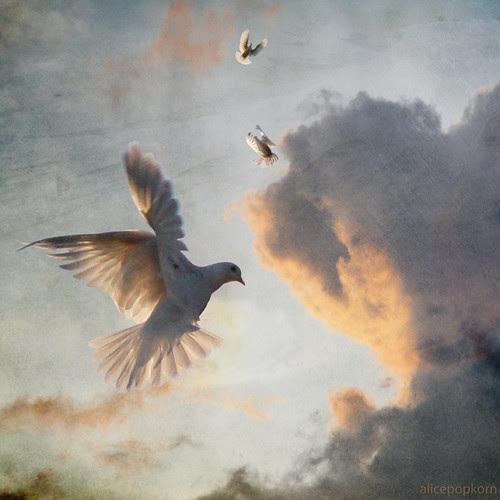 peace dove por alicepopkorn
