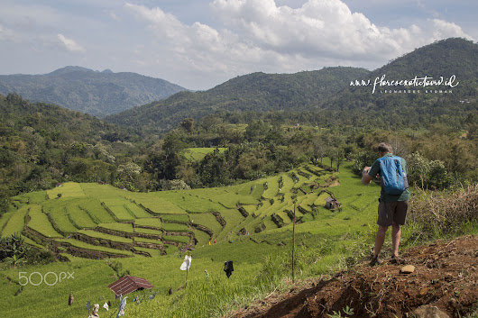 Rice field terrace in Ruteng - Flores island