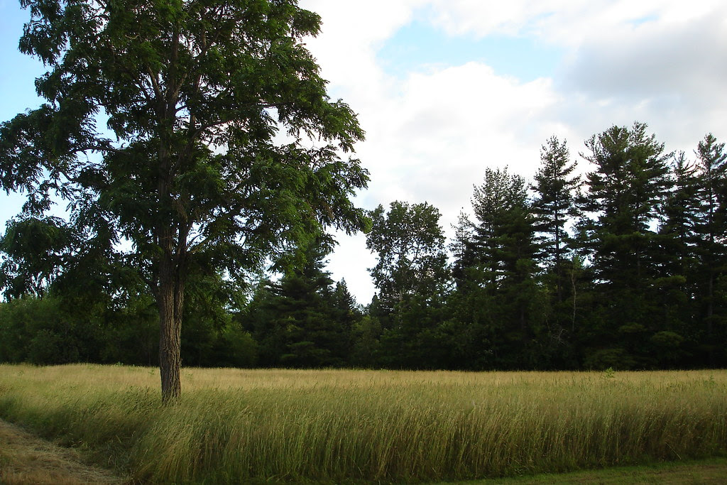 Field at the farm
