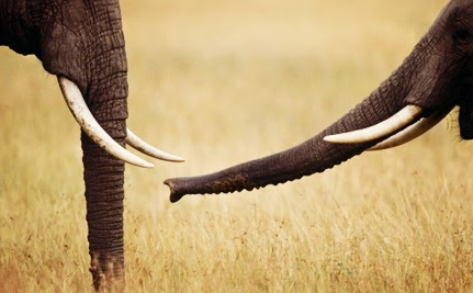 Online Retailer #Rakuten #Ichiba - Major #Shareholder in #Pinterest - Under Fire for #Selling #Ivory...