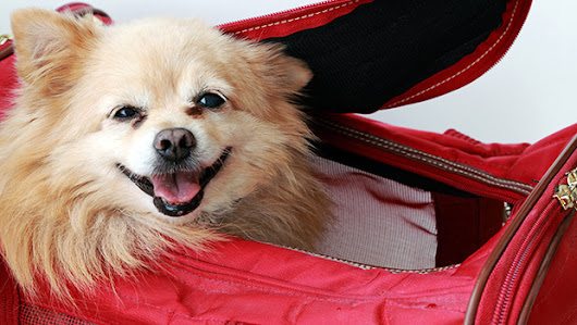 How to Travel Outside the Country with a Pet