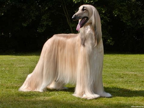 High Stamina Dog Breeds Pictures   Pets World