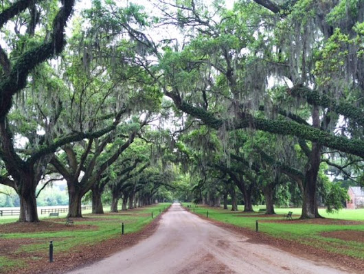 Boone Hall Plantation | The Front Door Project