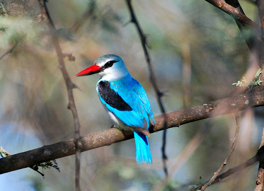 Meet the Colorful Kingfishers of Southern Africa