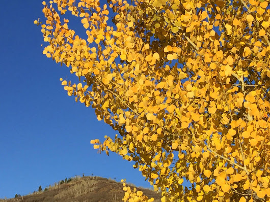 "Mountain Resorts on Twitter: ""A few hardy lower-mtn. trees still sport fall color, brightening walks even in the last evenings of Daylight Saving Time. #steamboatsprings """