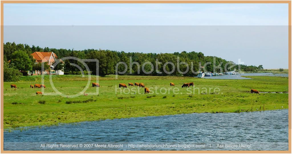 Prerow Landscape Cows by Meeta Albrecht