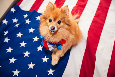 Fourth of July Safety Tips for Dogs