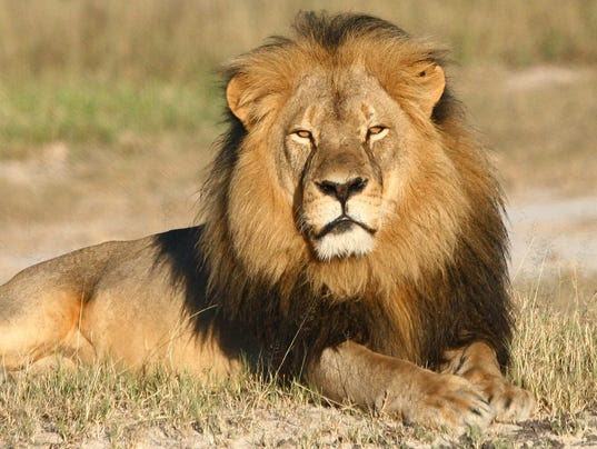 AP ZIMBABWE LION KILLED I ZWE
