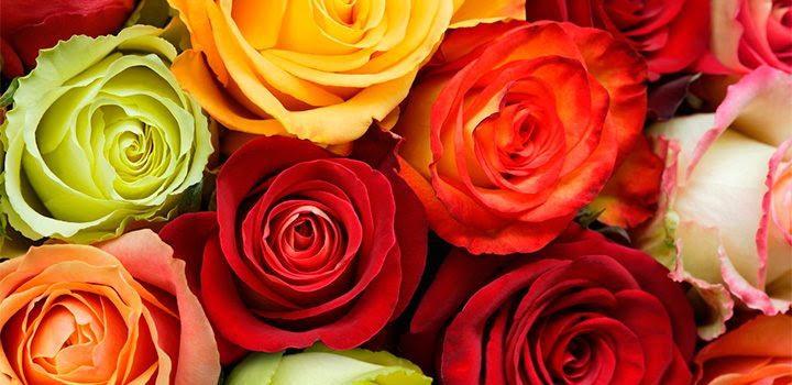 Significado De Los Colores De Las Rosas