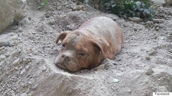 dog buried alive