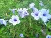 Ini Dia Bunga yang Hidup  Liar Tetapi Tetap Cantik
