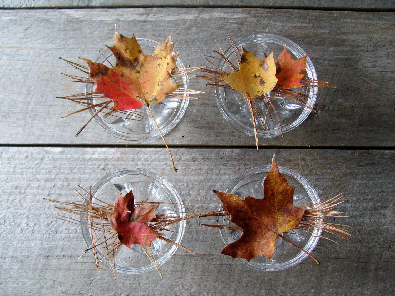Glass Dessert Dishes