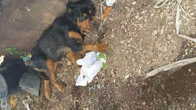 La historia de una perrita paralizada que «volvió a la vida» tras ser abandonada en un basurero