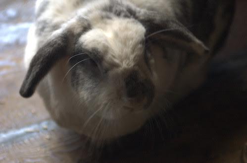 Barge Bunny