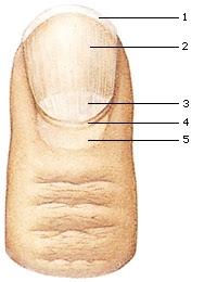 Cuticle Care Nails