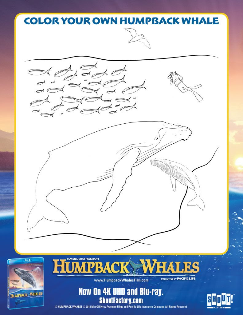 HumpbackWhales_Color