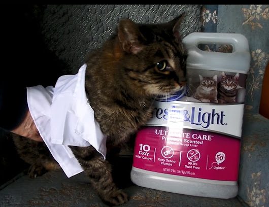 That Time We Tried To Put a Tiny Lab Coat On Our Cat - Reel Life With Jane