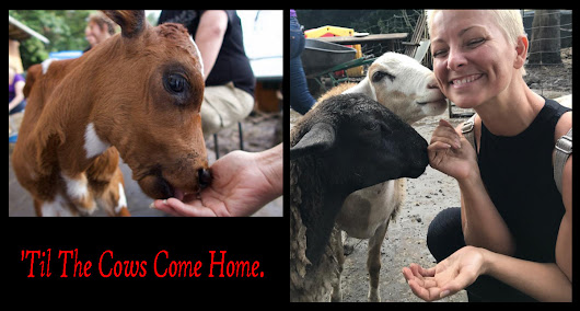 'Til The Cows Come Home | LinkedIn