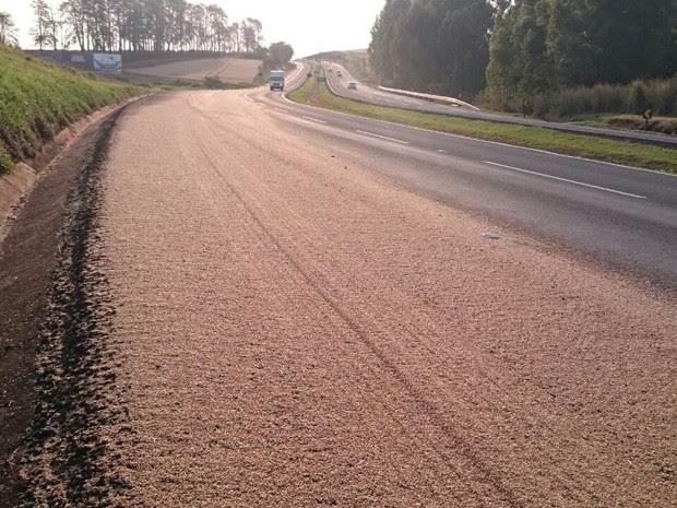 Motoristas precisam redobrar a atenção no trecho, pois milhares de grãos estão espalhados no acostamento (Foto: Alberto D´Angele/RPC)