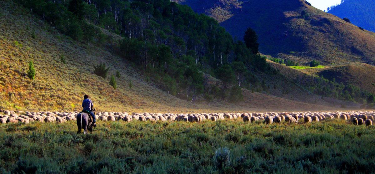 Conheça o Festival de Arrasto de Ovelhas 16