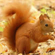Interesting Squirrel Facts