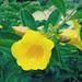 黄色の花 ~ きいろのはな 2