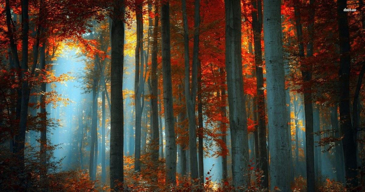 25 Aesthetic Autumn Desktop Wallpaper Basty Wallpaper