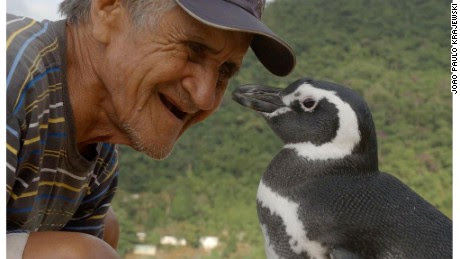 Dindim the penguin returns to the man who saved his life